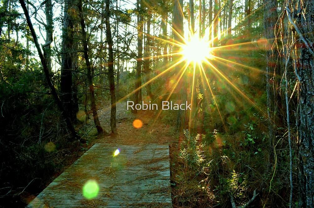 Hammock Hills by Robin Black