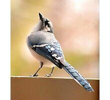 Winter Blue Jay Photographic Print