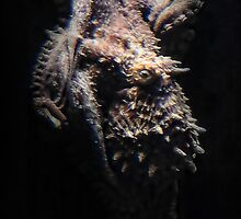 Octopuss by vigor