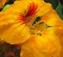 The Golden Flower by Maria Mizzi