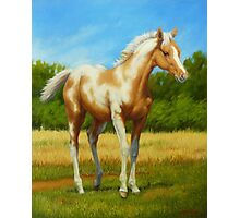 Pretty Baby-Paint Foal Photographic Print