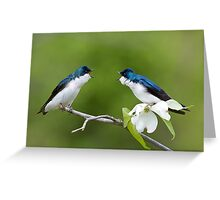 Tree Swallows on Flowering Dogwood Branch Greeting Card