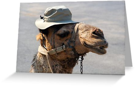 A Camel in a Tilly Hat by Jeffery Borchert