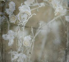 Winter flowers with Daguerreotype by Anita Orheim