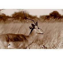 One Horn Photographic Print