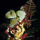 Underwater Xmas Tree by George Borovskis