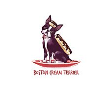 Boston Cream Terrier Photographic Print