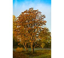 last breath of autumn Photographic Print