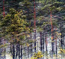 30.1.2013: Pine trees, Blizzard by Petri Volanen