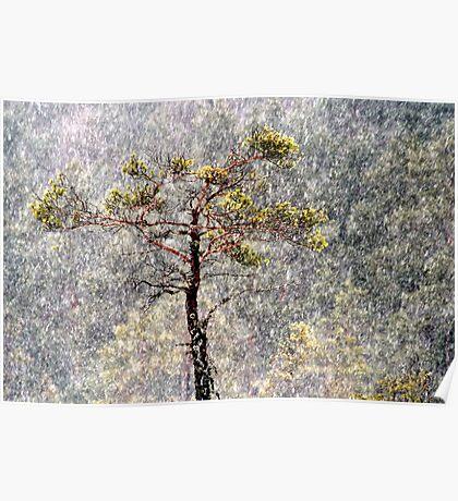 30.1.2013: Pine Tree, Blizzard Poster