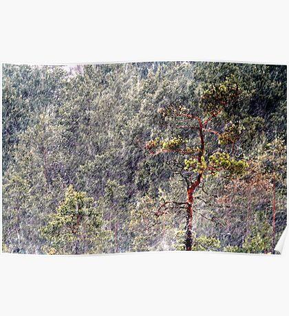 30.1.2013: Pine Tree, Blizzard II Poster