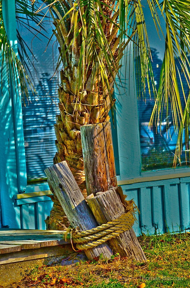 The Palm by TJ Baccari Photography