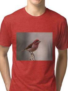 Purple Finch portrait Tri-blend T-Shirt