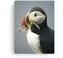 Puffin with nesting materials Canvas Print