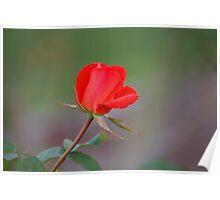 Valentine wish Poster