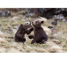 Grizzly Bear Cubs - Twins!  Yellowstone National Park Photographic Print
