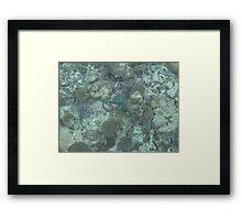 Corel Fish Framed Print