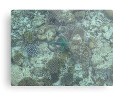 Corel Fish Metal Print
