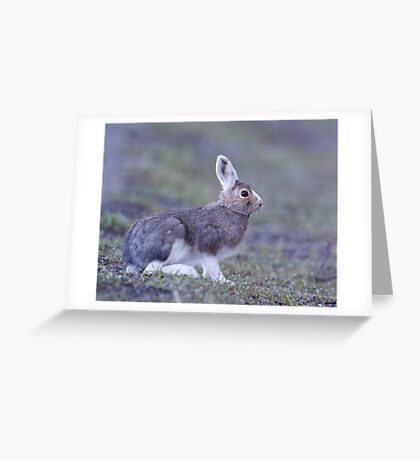 Snowshoe Hare changing back to summer's brown, Yellowstone Greeting Card