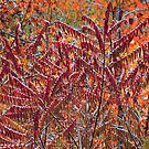 SUMAC,AUTUMN by Chuck Wickham