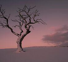 Big Tree - Little Tree by Brian Kerr