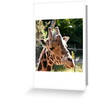 Baringo Giraffe Greeting Card