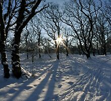 That's winter! by Frits Klijn (klijnfoto.nl)