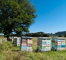 beehives 2 by Anne Scantlebury