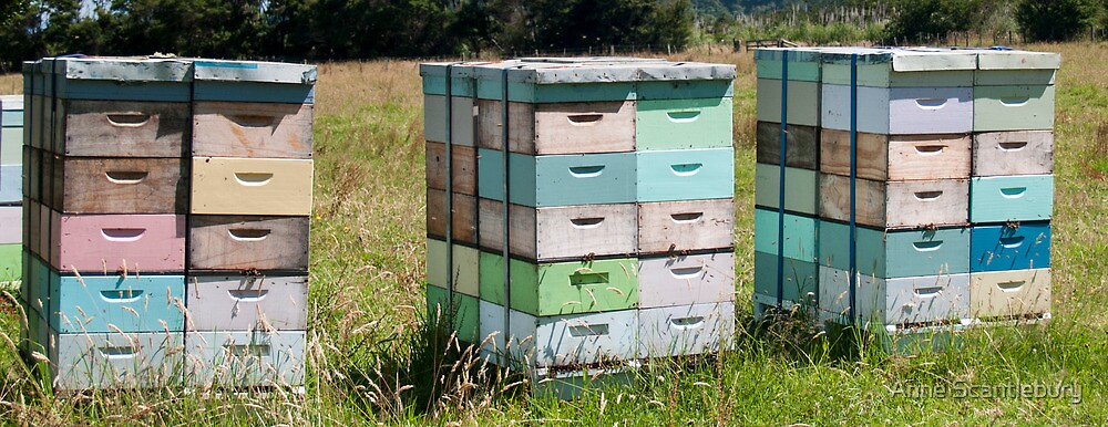 beehives 3 by Anne Scantlebury