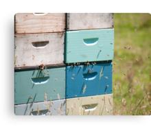beehives 5 Canvas Print