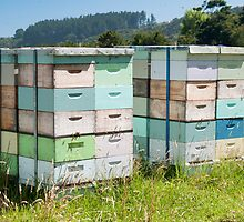 beehives 6 by Anne Scantlebury