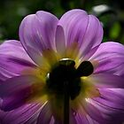 The Dahlia Lama by Ben Loveday