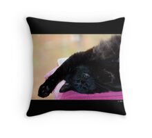 Felis Catus - Black Female Turkish Angora Cat Sleeping Throw Pillow