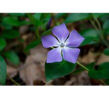 My Mother's Violet Photographic Print