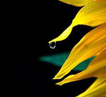 Dew diamond by Luke Lansdale