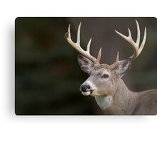 Whitetail Buck Portrait Metal Print