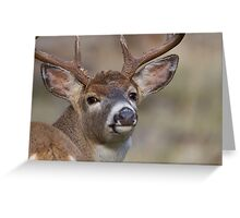 """Whitetail Buck Portrait, """"over the shoulder"""" Greeting Card"""