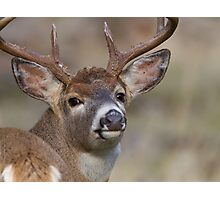 """Whitetail Buck Portrait, """"over the shoulder"""" Photographic Print"""