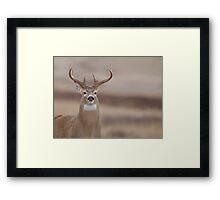 Whitetail Buck Portrait featuring rut swollen neck Framed Print