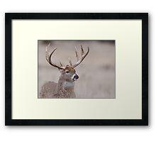 Whitetail Deer Portrait - very old buck Framed Print