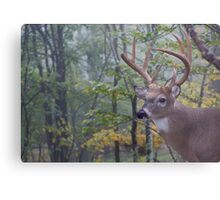 Whitetail Buck Deer Portrait in deciduous forest habitat Metal Print