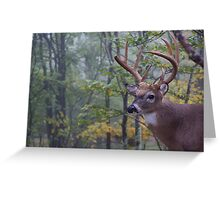 Whitetail Buck Deer Portrait in deciduous forest habitat Greeting Card
