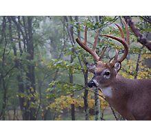 Whitetail Buck Deer Portrait in deciduous forest habitat Photographic Print
