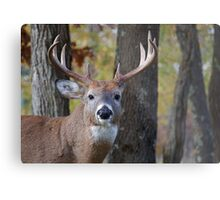 Whitetail Buck Deer Portrait in deciduous forest  Metal Print