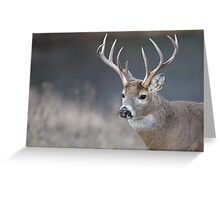 White-tailed Buck Deer with non-typical antlers, portrait Greeting Card