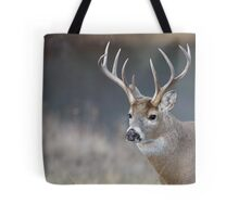 White-tailed Buck Deer with non-typical antlers, portrait Tote Bag