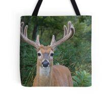 White-tailed Buck Deer with velvet antlers, summer portrait  Tote Bag