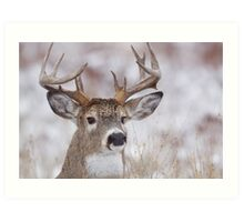 White-tailed Buck Deer with non-typical antlers, winter portrait Art Print