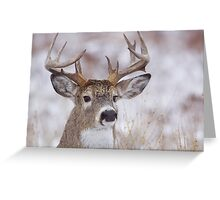 White-tailed Buck Deer with non-typical antlers, winter portrait Greeting Card
