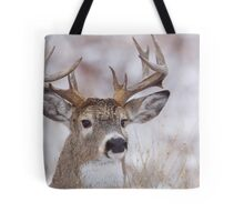 White-tailed Buck Deer with non-typical antlers, winter portrait Tote Bag